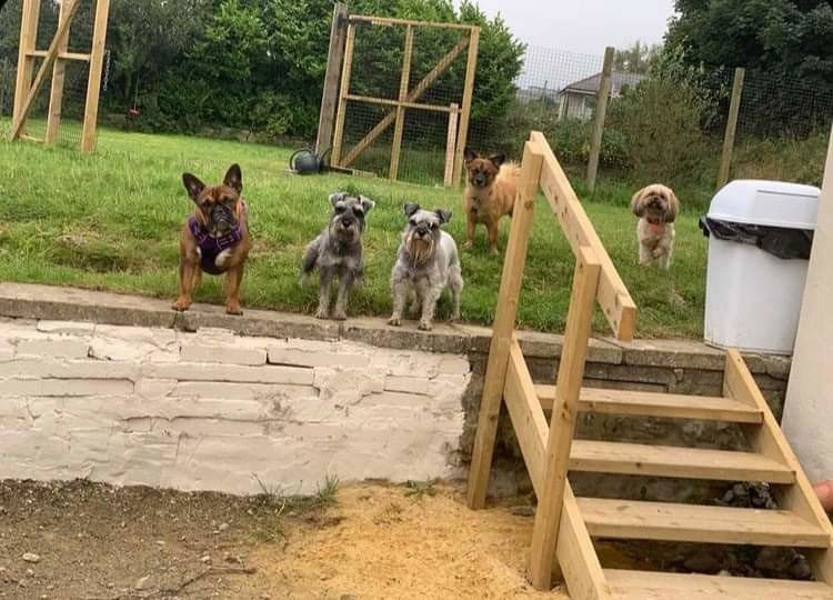 Bilbos Board and Walk Dog Services At Hound Land